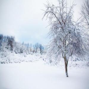 tarzan-treehouse